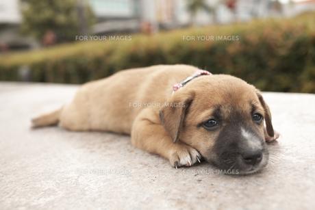 子犬(雑種)の素材 [FYI01127899]