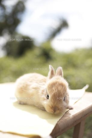 ウサギの素材 [FYI01127904]