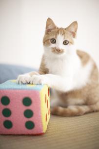 サイコロと子猫(雑種)の素材 [FYI01127952]