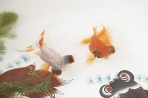 金魚鉢の中の金魚2匹の素材 [FYI01128244]