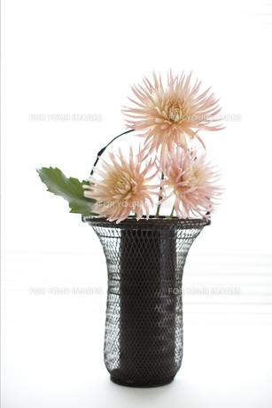 生けた花の素材 [FYI01128382]