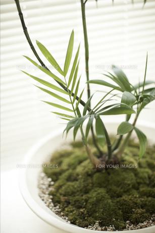 観葉植物の素材 [FYI01128423]