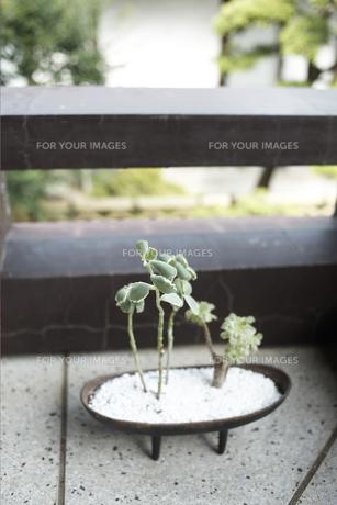 お寺の廊下に置いた観葉植物の素材 [FYI01128443]
