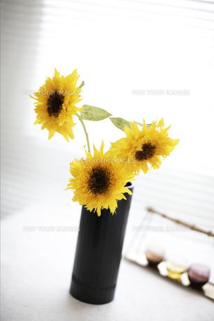 生けた花の素材 [FYI01128515]
