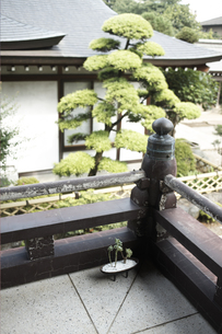 お寺の廊下の素材 [FYI01128522]
