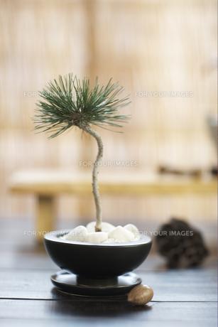 盆栽の素材 [FYI01128536]