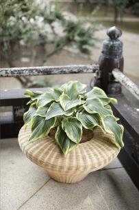 お寺の廊下に置いた観葉植物の素材 [FYI01128564]