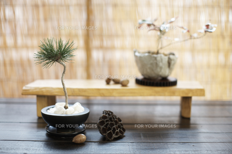 盆栽の素材 [FYI01128586]
