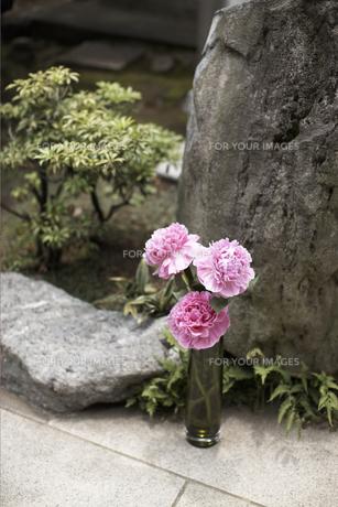 庭の花の素材 [FYI01128614]