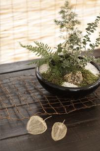 盆栽とほうずきの素材 [FYI01128623]