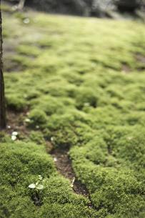 庭の苔の素材 [FYI01128657]