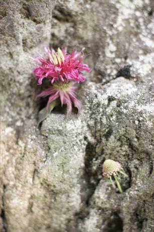 石の上に置いた花の素材 [FYI01128660]