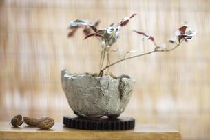 盆栽の素材 [FYI01128699]