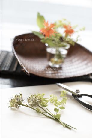 剪定ばさみと花の素材 [FYI01128738]