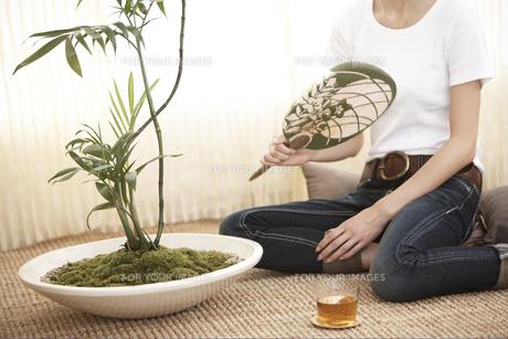 うちわであおぐ女性と観葉植物の素材 [FYI01128976]
