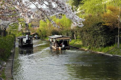 4月 桜の伏見界隈 京都の春景色の素材 [FYI01130029]