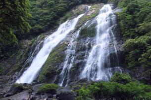 6月初夏,屋久島の大川(おおこ)の滝の素材 [FYI01130799]