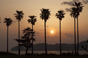 椰子の木のシルエットの素材 [FYI01131787]
