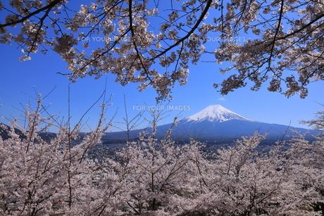 富士山の写真素材 [FYI01132100]