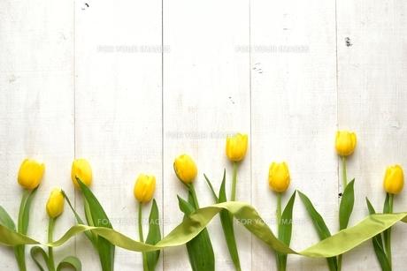 黄色いチューリップとリボン 白木材背景の写真素材 [FYI01132132]