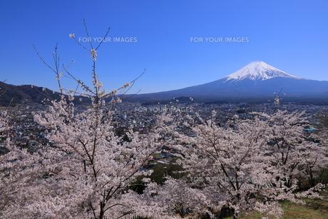 富士山の写真素材 [FYI01132187]