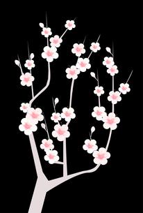 梅のイラスト素材 [FYI01132289]