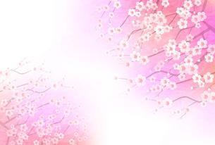 梅のイラスト素材 [FYI01132294]