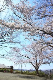 禅当寺公園の素材 [FYI01134096]