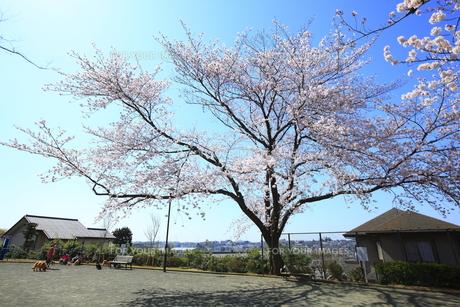 禅当寺公園の素材 [FYI01134383]