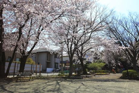 禅当寺公園の素材 [FYI01134407]