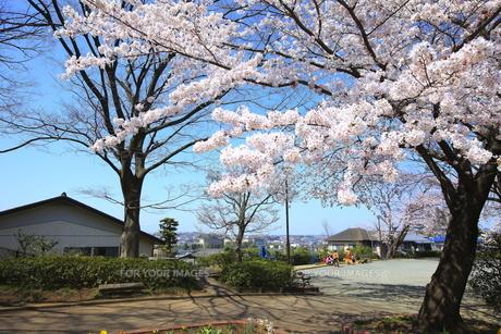 禅当寺公園の素材 [FYI01134412]