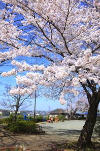 禅当寺公園の素材 [FYI01134657]