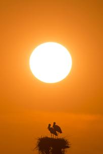 コウノトリと夕陽の素材 [FYI01135520]