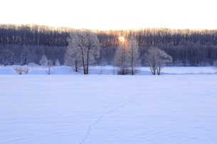 朝日を背に霧氷の覆う木々の素材 [FYI01136755]