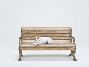 ベンチの上で伏せをする犬の素材 [FYI01139299]