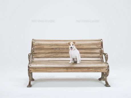 ベンチの上でお座りをする犬の素材 [FYI01139362]