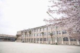 桜と校舎の素材 [FYI01141475]