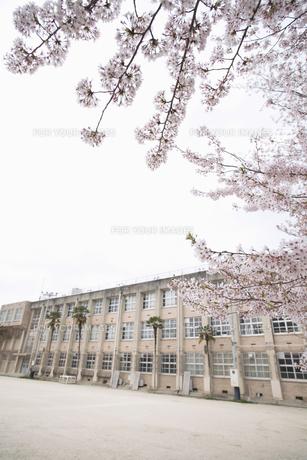 桜と校舎の素材 [FYI01141523]