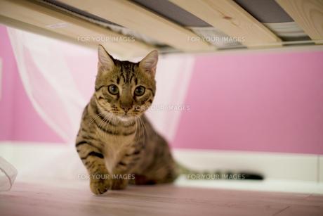 ベッドの下の猫の素材 [FYI01143378]