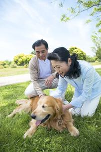 犬と遊ぶシニア夫婦の素材 [FYI01143449]