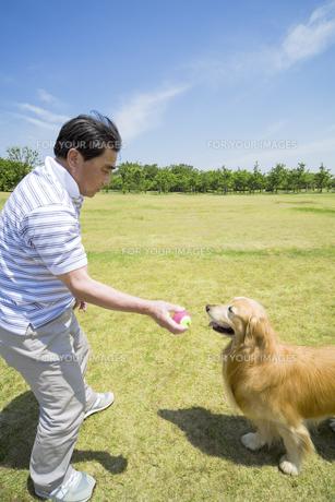 犬とボール遊びをするシニア男性の素材 [FYI01143450]
