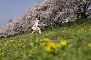 草原を歩く女性と桜並木の素材 [FYI01143569]