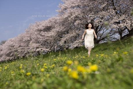 草原を走る女性と桜並木の素材 [FYI01143575]