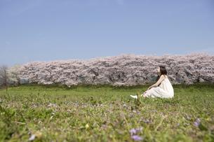草原に座る女性と桜並木の素材 [FYI01143582]