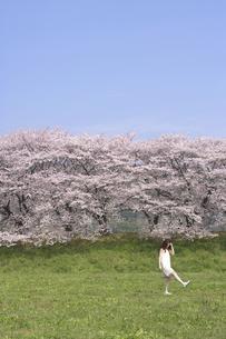 草原の女性と桜並木の素材 [FYI01143590]