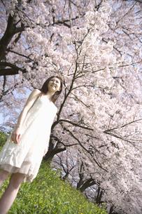 草原に佇む女性と桜の素材 [FYI01143602]