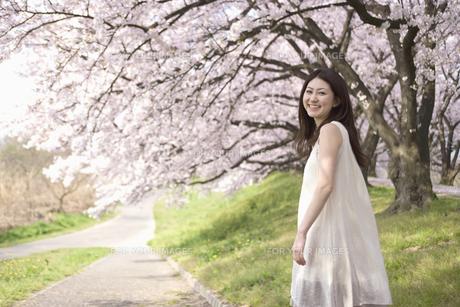 振り返る女性と桜並木の素材 [FYI01143603]