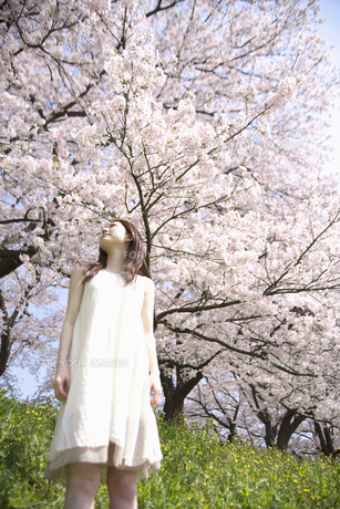 草原に佇む女性と桜の素材 [FYI01143610]