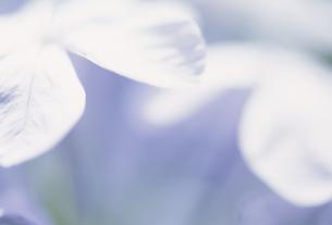 花アップの素材 [FYI01143807]