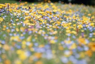 花畑の素材 [FYI01143812]